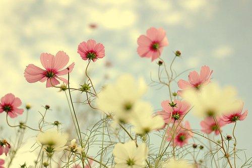 Love » Tout le monde dit que l'amour fait mal, ce qui est faux. La solitude fait mal. Ce faire rejeter fait mal.  Perdre quelqu'un fait mal. Tout le monde confond c'est petites choses avec l'amour.  Mais en réalité l'amour est la seule chose dans ce monde qui fait fuir  tout ce mal et qui te rend bien.