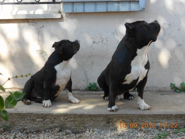 le duo !!!!!!!!!!!!!!!
