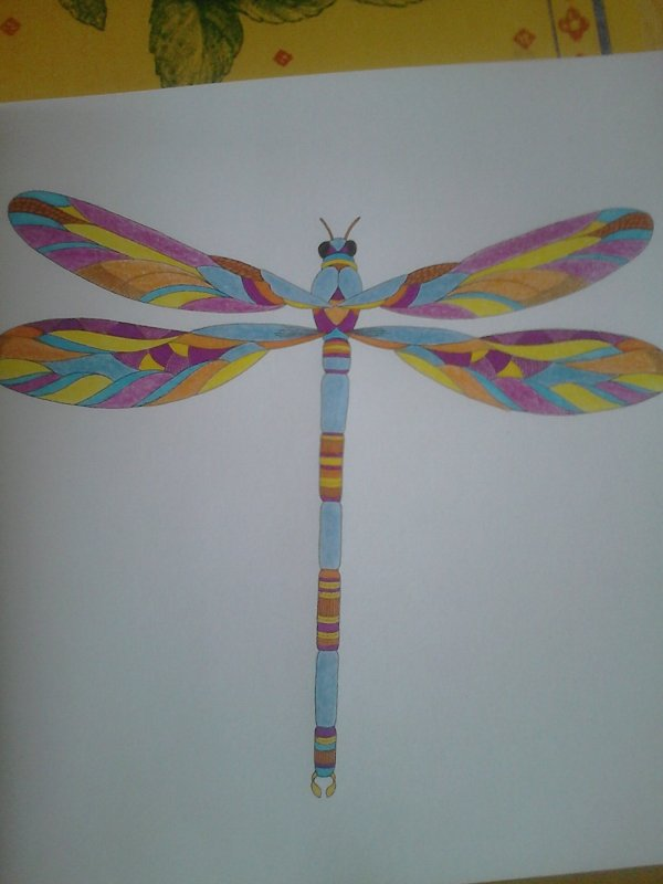 Animaux fantastiques : Evenrude la libellule