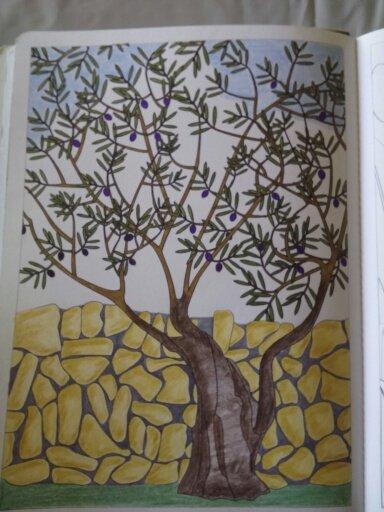 Au source du bien être,  jardins zen : l'olivier.  Coloriages Nini