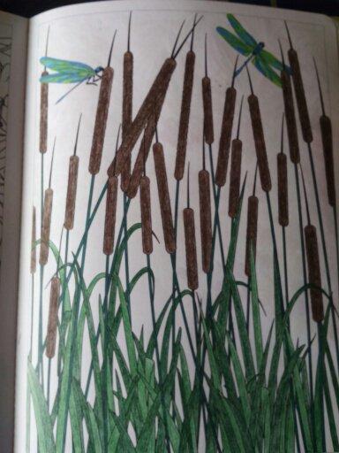 Aux sources du bien être,  jardin zen. Les roseaux . Coloriages Nini