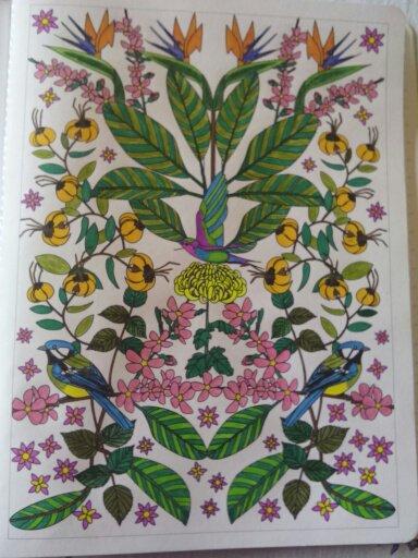 Au source du bien être,  jardins zen : les oiseaux de paradis. Coloriage Nini