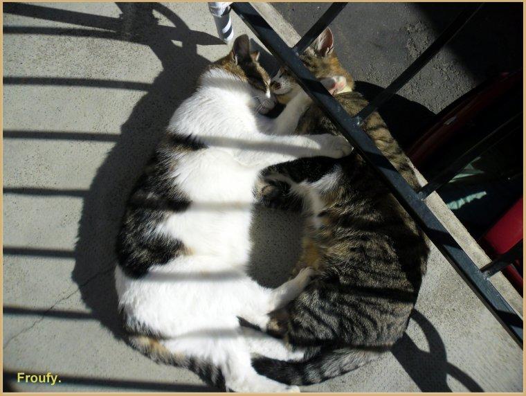 Amour de chats ou chats d'amour !!!!