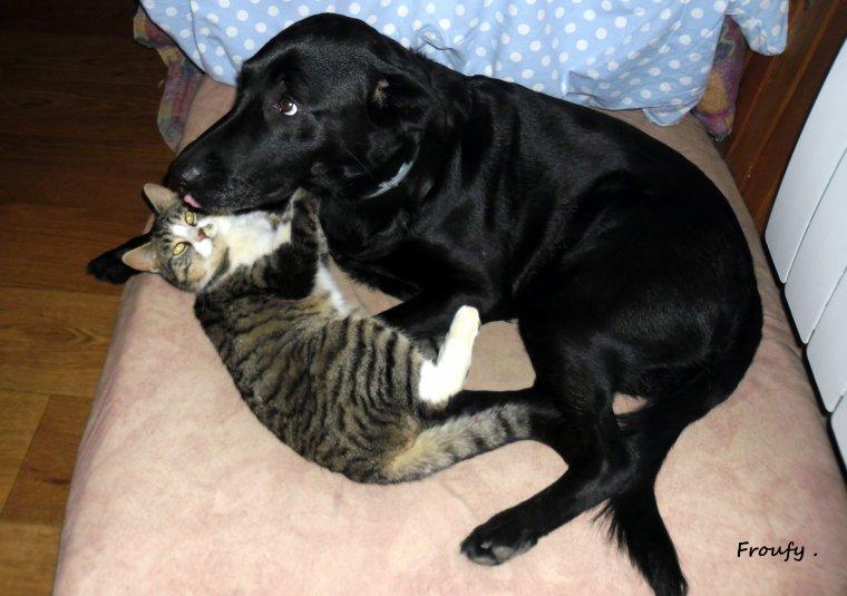 La Ninette et son amour de chat !