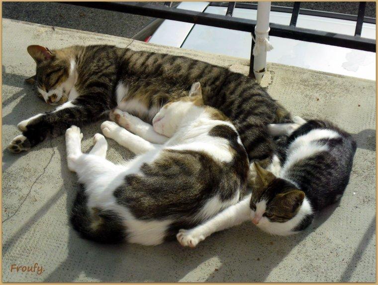 Un peu de tendresse avec la famille chat !