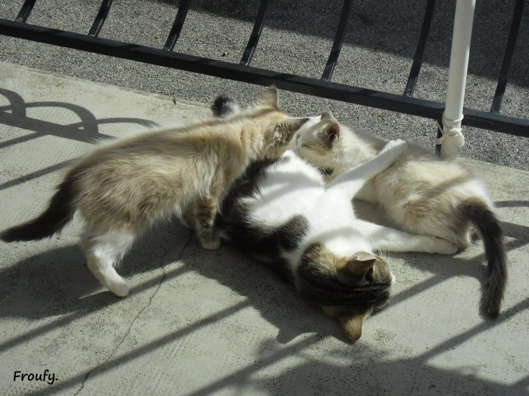 Encore la famille chat !!!