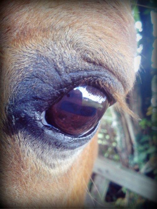 L'½il de mon poney *-*  ♥