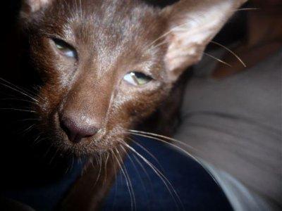 mon chat Ezeckiel <3