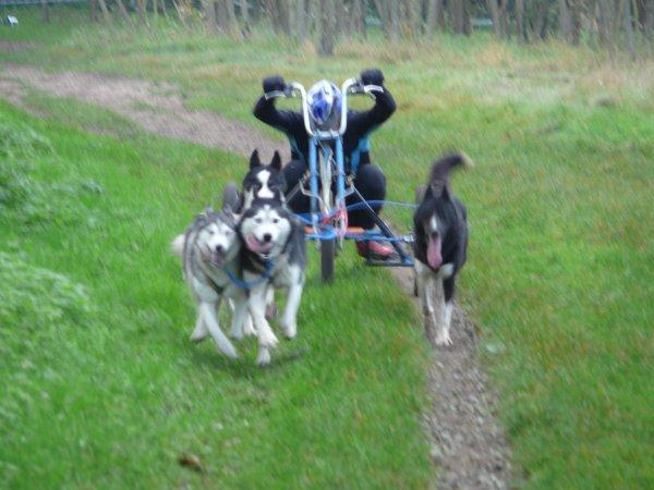 Les attelages 4 et 6 chiens