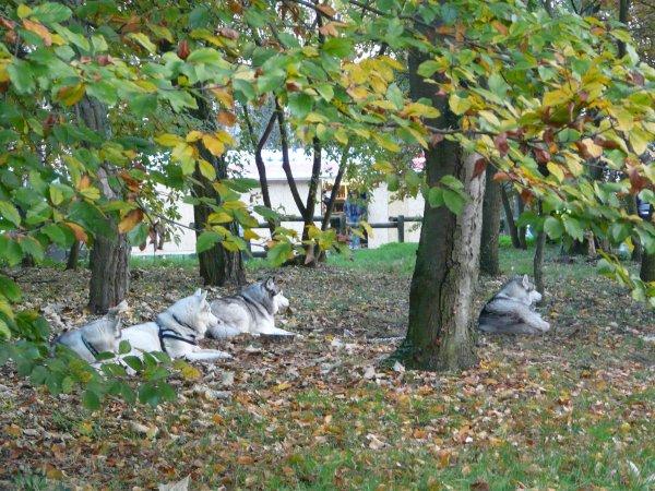 Fatigués les loups, dodo pour eux et pour nous repas sous tente très sympa et très bon !!