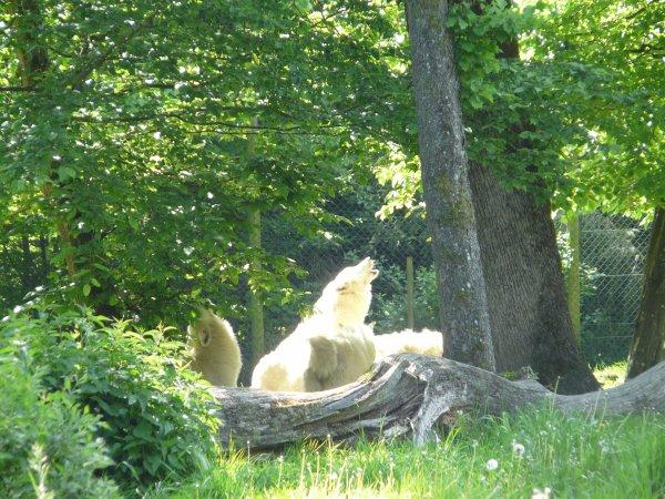 Séjour au Parc de Sainte Croixvendredi 18 mai 2012 10:26