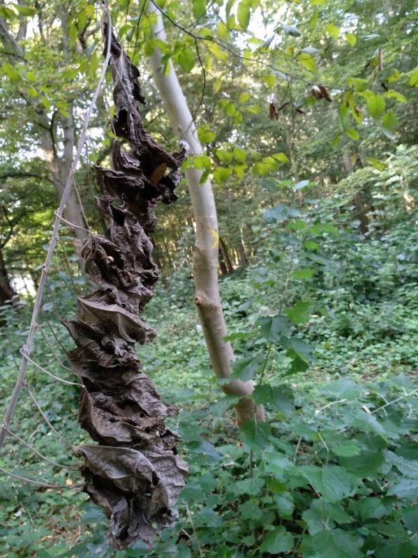 balade au bois