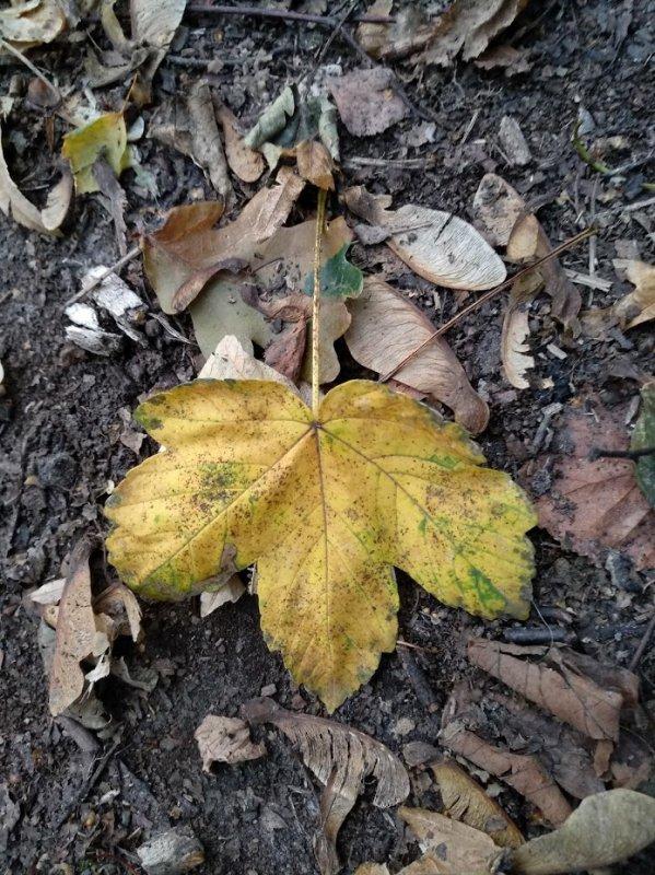 balade en foret, l'automne arrive a grand pas