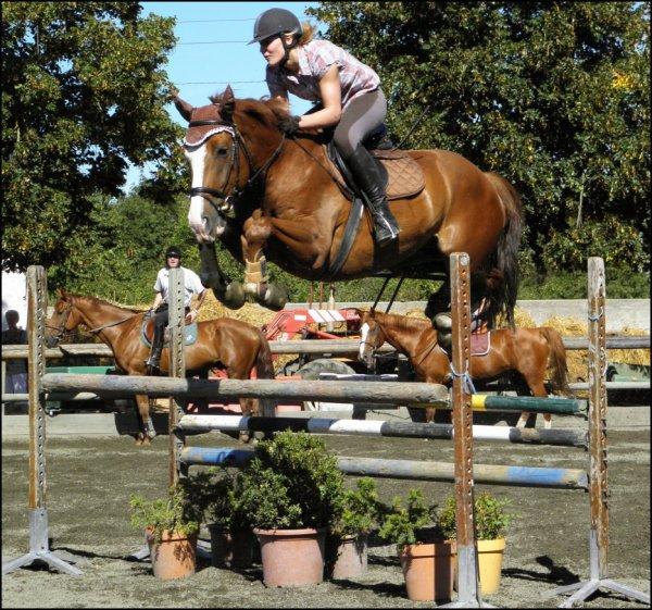 Présentation des chevaux.