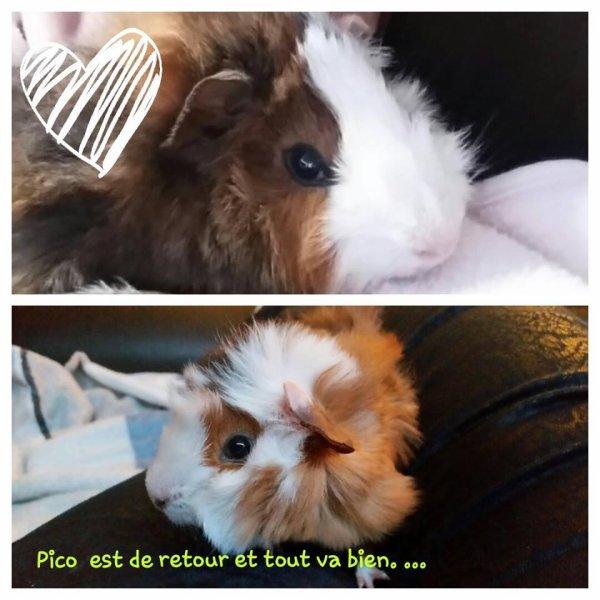 Pico va bien
