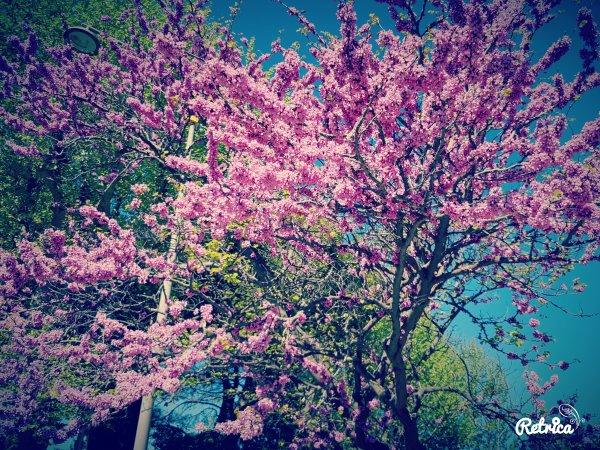 Le printemps ...