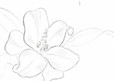 fleur de lys nettement plus joli =x - mes dessins et chansons