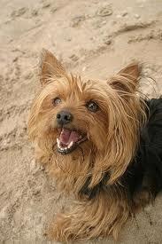 Journal d'un chien :'(