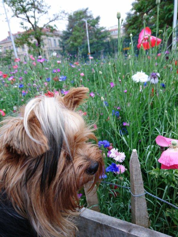 Je sniffes ces jolies fleurs, Maman a dit pas touche