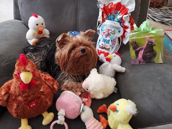 Joyeuses Fêtes de Pâques à vous tous, les cloches m'ont apporté plein de peluches bisous