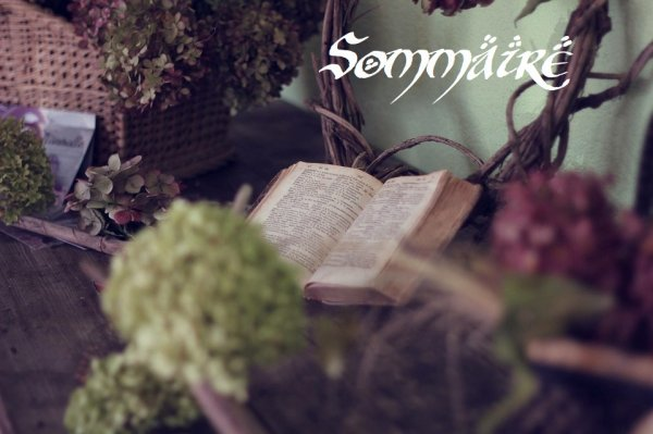 ~*~ Sommaire ~*~