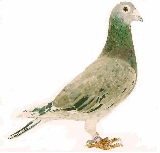 pigeoninfo  a fêté ses 38 ans le 26/03/2018, pense à lui offrir un cadeau.Dimanche 29 mars 2018 10:48