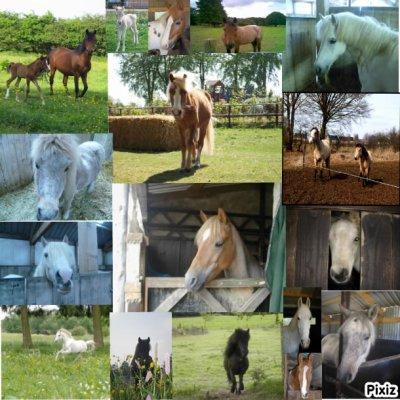 tous les poneys