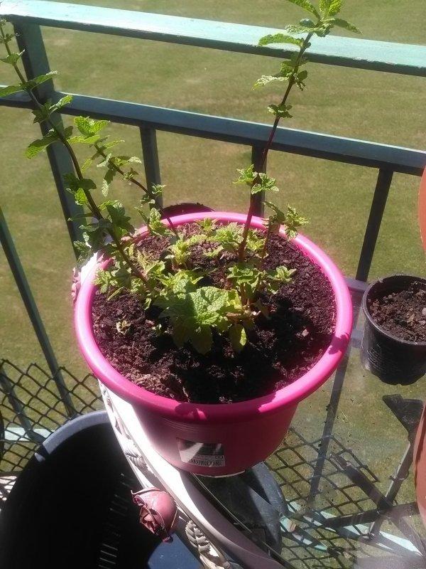 Côté jardinage