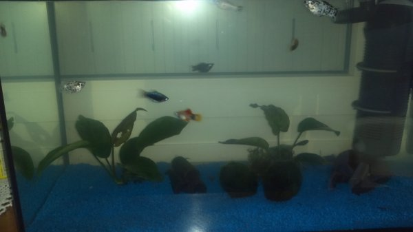 Mon aquarium de 55 litres !!!