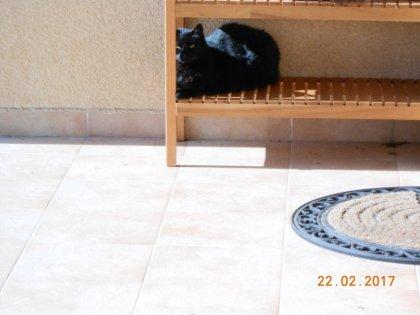 00650 - Une vie de Chat, une vie de Pacha