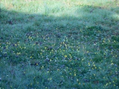 00729 - Parterre fleuri, moral revit