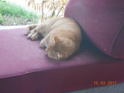 00762 - Vie de Pacha et non de pas chat