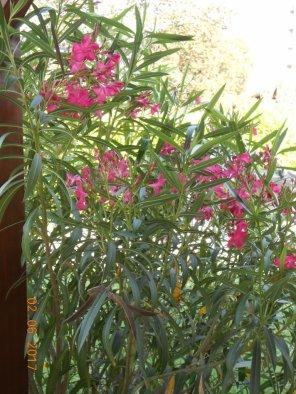 01239 - De la floraison