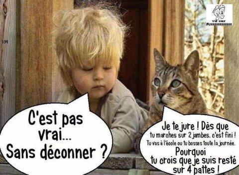 02039 - Ch'est cha la vie de Pacha