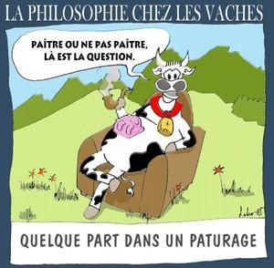 Philosophie de vaches : celle qui rit et celle qui lèche