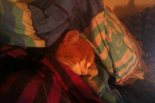 Mon petit chat d'amour qui fais dodo dans ma couveture