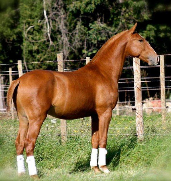 cheval alezan
