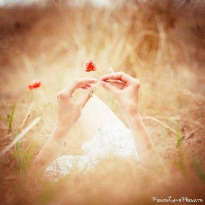 « La vie est une rose dont chaque pétale est un rêve et chaque épine une réalité. »
