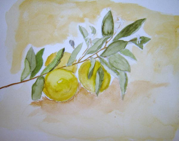 Citrons à l'Aquarelle