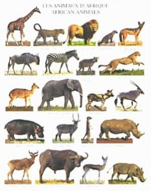 Les animaux de la savane africaine blog de hawa333 - Animaux savane africaine ...