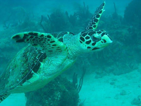 Les tortues d 39 eau et de terre blog de hawa333 - Terre et eau witry les reims ...