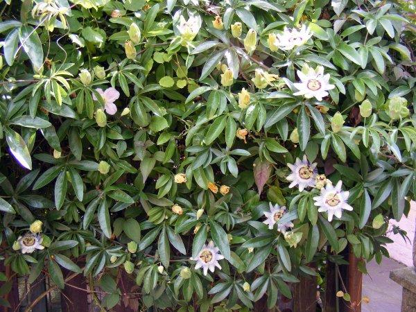 Quelques fleurs de notre jardin pour vous souhaité une bonne journée++++++