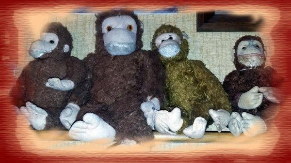Mes singes vous souhaite une bonne journée++++