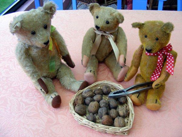les noix sont très bon cet année! mes ours vous souhaite un bonne soirée++++