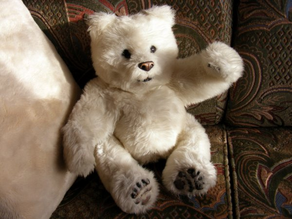 Ma dernière trouvaille Clodius,un ours blanc qui bouge parle et qui ronfle++