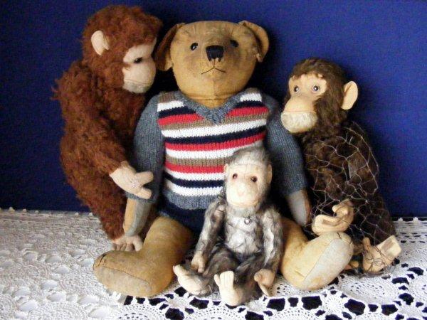 Omer en compagnie des singes vous souhaites une belle journée+++++