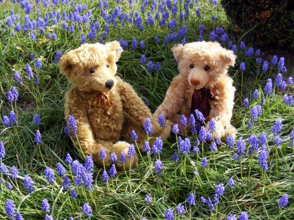 Mes ours Steiff dans les muscarie vous souhaites à tous une belle soirée+