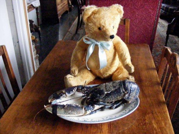 Mon ours Andreas admire le homard bleu+++