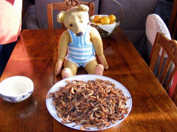 Stanley admire les bonne crevettes grise++++