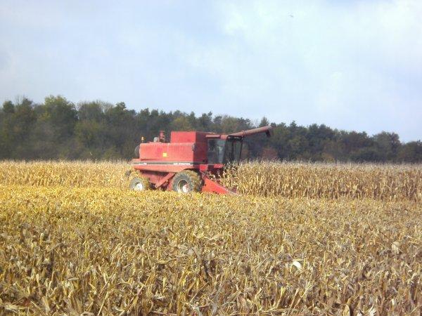 Récolte du maïs grain